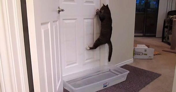 There's No Door That Can Stop This Cat Burglar